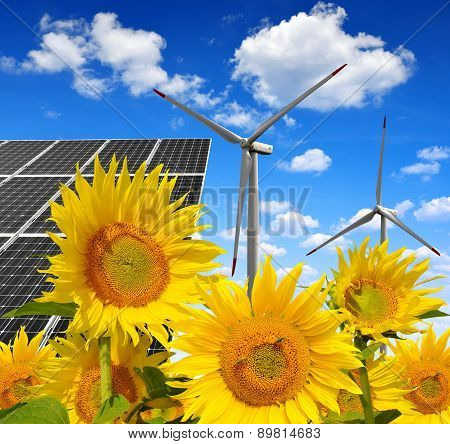 Solar energy panels with wind turbines in sunflower field