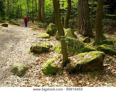 Boulders In The Woods