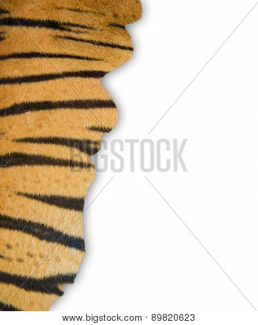 Tiger Fur On White Background