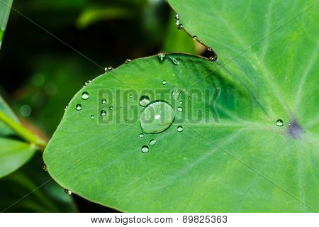 Water Drops On Leaves Bon