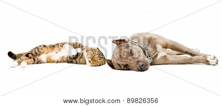 Dog and cat sleeping lying together