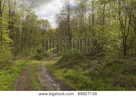 Woodland Track.
