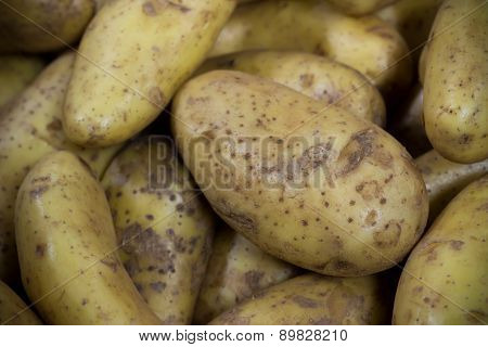Clean Russet Potato