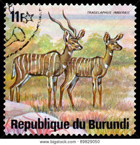 Vintage  Postage Stamp. Lesser Kudus. Animals Burundi.