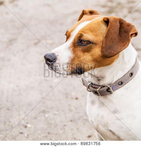 Muzzle Dog Close Up