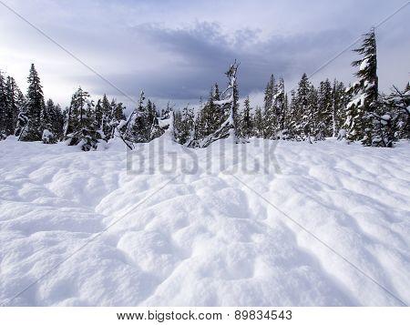 Snow Footprin