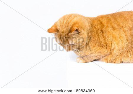 cat looks down