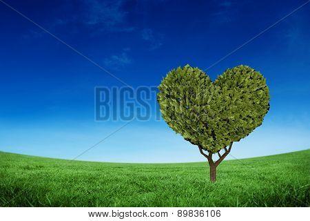 Heart shaped plant against green field under blue sky