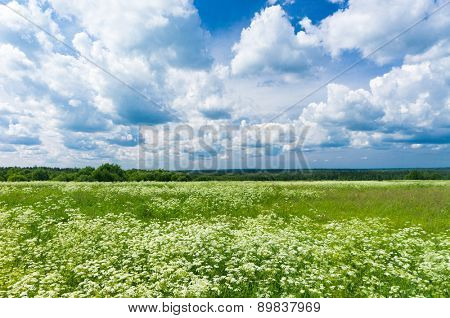 Plain Nature Scenic View