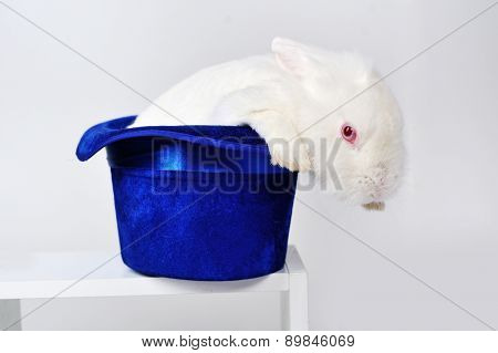 White Rabbit In A Blue Hat