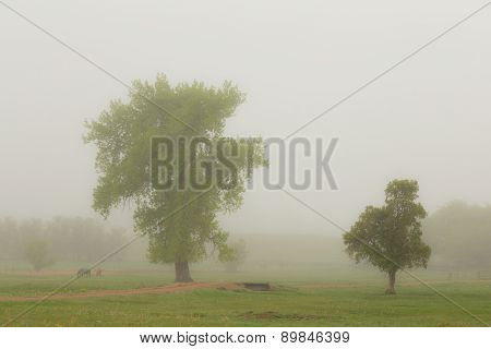 Beautiful Foggy Country Springtime Morning