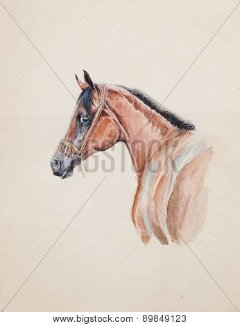 Watercolor Of Arabian Horse On Old Paper
