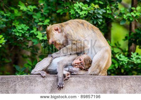 Monkey family at Ratchaburi Province,Thailand.