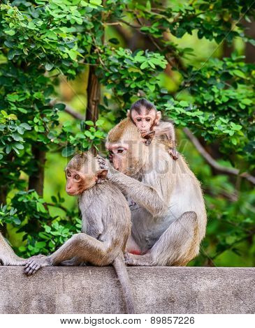 Monkey family at Ratchaburi Province,Thailand.