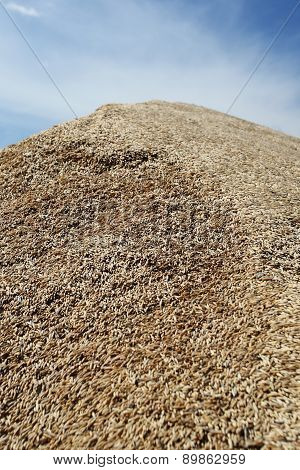 Heap Of Grains Of Oats Against The Blue Sky