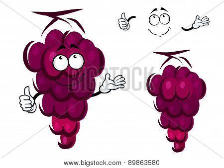 Bunch of fresh ripe purple grapes