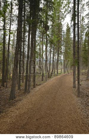 Autumn forest brown dirt passage walkway in Europe
