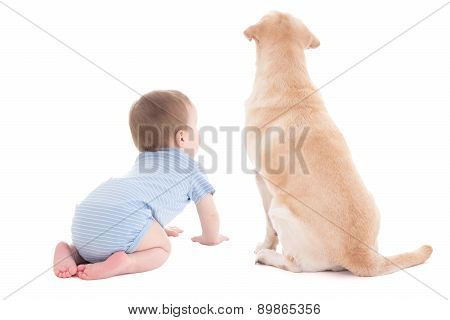 Back View Of Baby Boy Toddler And Golden Retriever Dog Isolated On White
