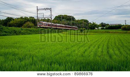 Train in a Rice Field