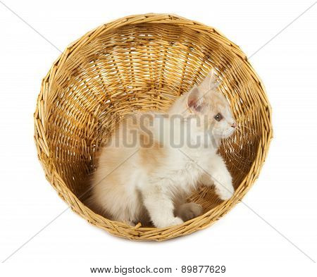 Cute Cat Isolated Over White Background