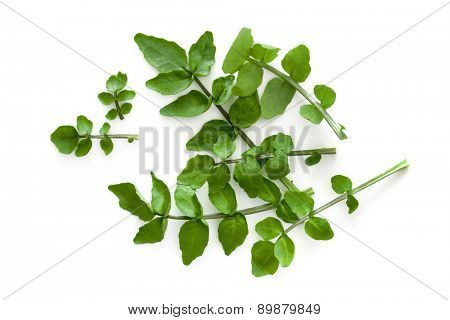 Watercress isolated on a white background.  Overhead view.