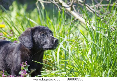 Black Mix Breed Puppy Among The Field Flowers