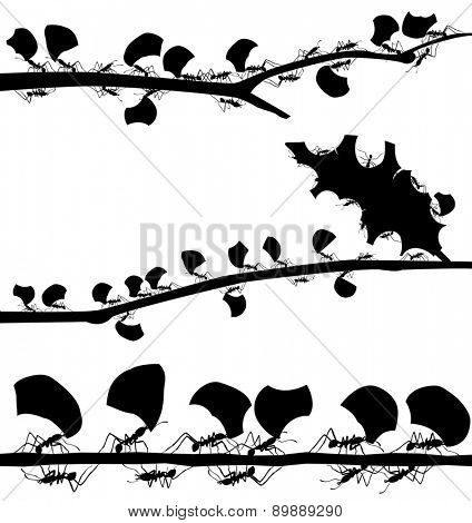 Set of illustrated silhouettes of leaf cutter ants on branches
