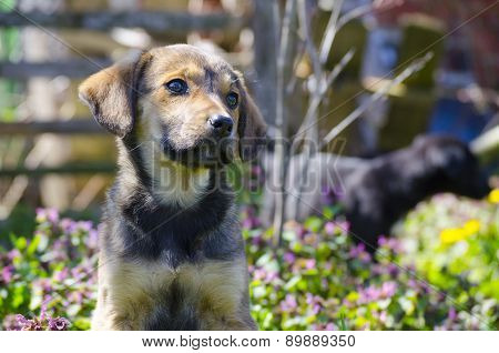 Mix Breed Puppy Among The Field Flowers