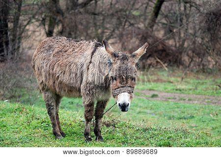Poor Wet Donkey On The Rain