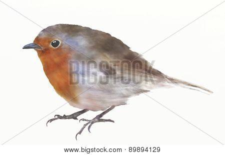 Robin Redbreast Bird Digital Watercolor Illustration.
