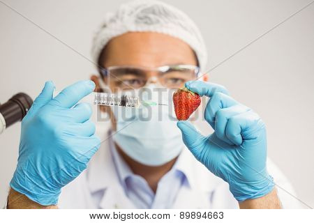 Food scientist injecting a strawberry at the university