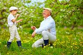 pic of grandpa  - happy grandson and grandpa having fun in spring garden blowing dandelions - JPG