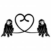foto of marmosets  - Animal love - JPG