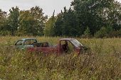 pic of tall grass  - Red and blue pickup trucks almost buried in the tall grasses and weeds surrounding them - JPG