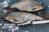 image of caught  - Freshly caught fish on a wooden table and a knife for cleaning of scales - JPG