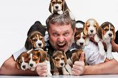 image of puppy beagle  - The ecstasy man and big group of a beagle puppies on white background - JPG