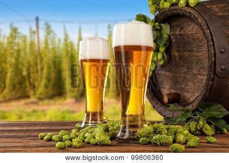 Beer glasses served on wooden desk with keg. Hop-field on background