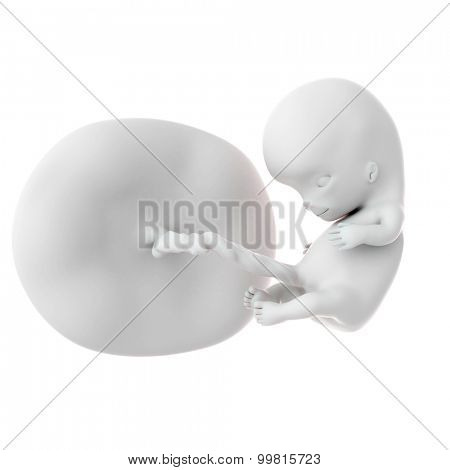 medically ac10curate illustration of a fetus week 10