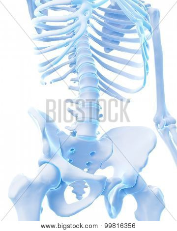 medically accurate illustration of the lower spine