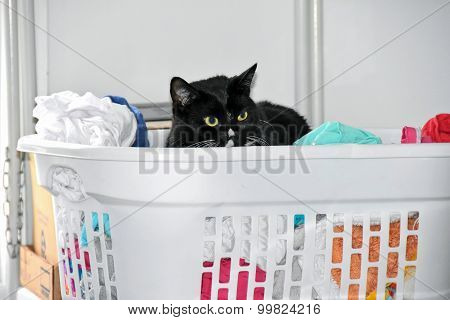 black cat in white laundry basket