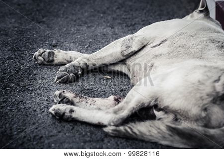 Run Over Dog