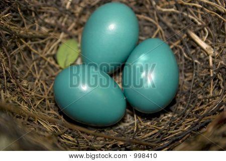 Catbird Eggs