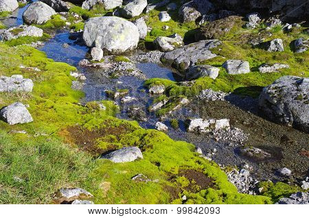 Stream In The Tundra Among The Moss And Stones