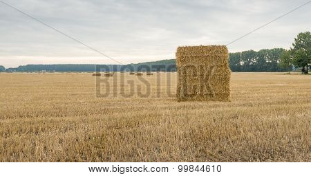 Large Stubble Field With Stacked Packs Of Straw