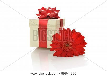Present Box With  Gerbera