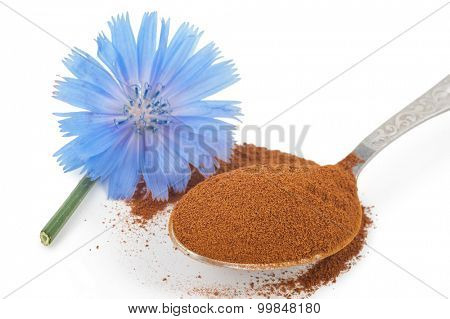 Blue chicory flower and powder of instant chicory