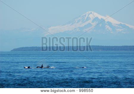 Whale Found The Pod