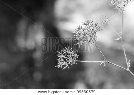 The Wild Abstract Blossoming Of Monochrome Tone
