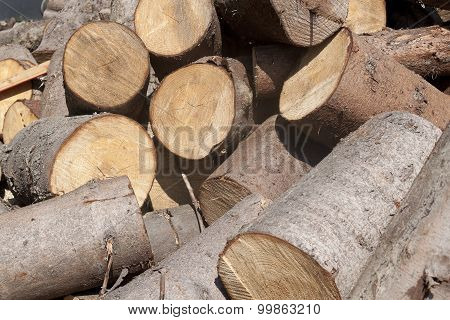 Sawn Tree Trunks