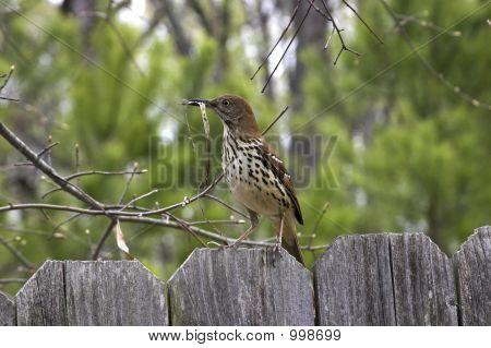 Nest Builder 2